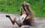 Почему говорят «Конь не валялся»