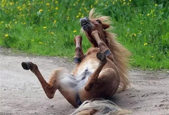 почему говорят конь не валялся
