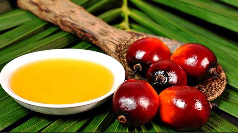 Пальмовое масло (вред и польза)